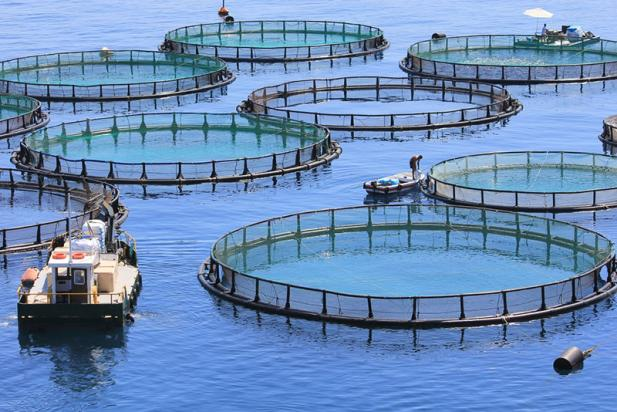 aquaculture essays Aquaculture is the cultivation of freshwater or saltwater wildlife aquaculture has increased in scale over the past 50 years and is said to be the source.