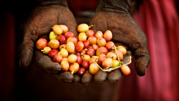 Poverty Inc. Kenya coffee_credit_simon_scionka